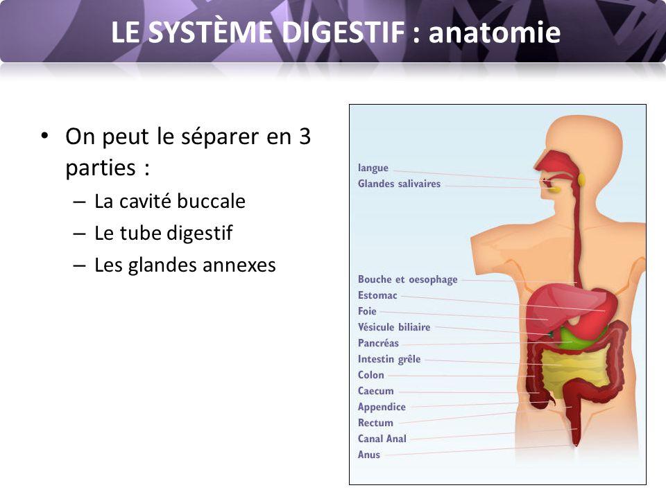 LE SYSTÈME DIGESTIF : anatomie On peut le séparer en 3 parties : – La cavité buccale – Le tube digestif – Les glandes annexes