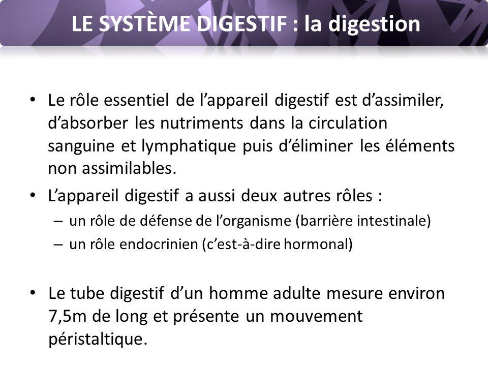 LE SYSTÈME DIGESTIF : la digestion La dégradation : Les aliments sont mastiqués dans la bouche et mélangés à la salive (sécrétée par les glandes salivaires) avant d'être avalés.