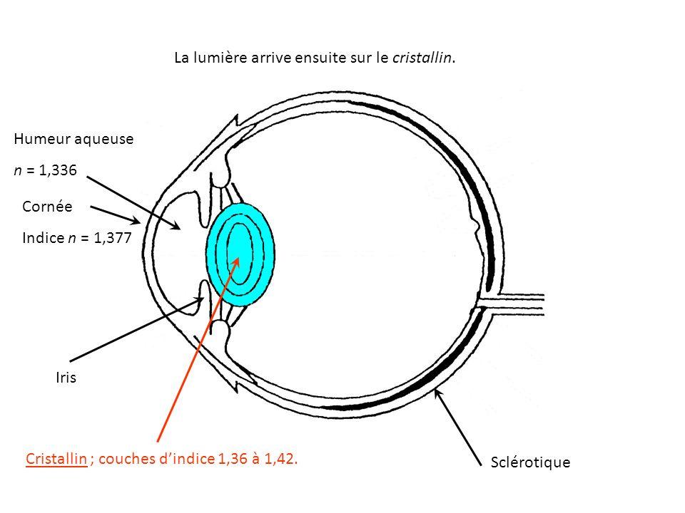 La lumière arrive ensuite sur le cristallin. Cristallin ; couches d'indice 1,36 à 1,42.