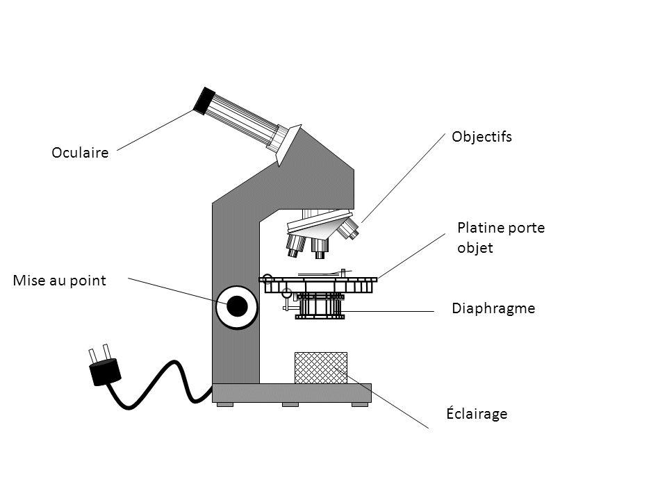 Mise au point Platine porte objet Éclairage Oculaire Objectifs Diaphragme