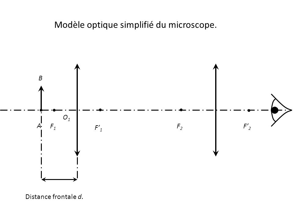 Modèle optique simplifié du microscope. O1O1 F1F1 F' 1 F' 2 F2F2 A B Distance frontale d.
