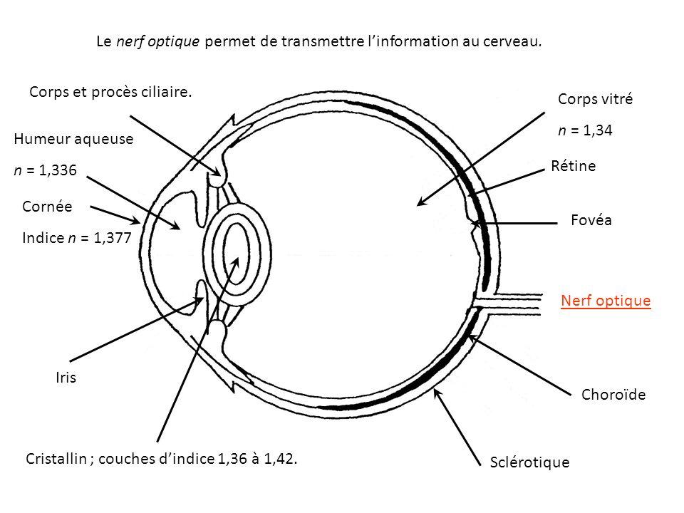 Le nerf optique permet de transmettre l'information au cerveau.