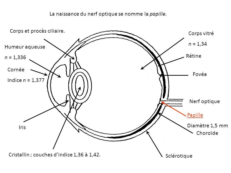 La naissance du nerf optique se nomme la papille.
