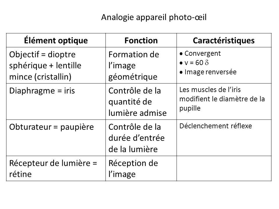 Élément optiqueFonctionCaractéristiques Objectif = dioptre sphérique + lentille mince (cristallin) Formation de l'image géométrique  Convergent  v = 60   Image renversée Diaphragme = irisContrôle de la quantité de lumière admise Les muscles de l'iris modifient le diamètre de la pupille Obturateur = paupièreContrôle de la durée d'entrée de la lumière Déclenchement réflexe Récepteur de lumière = rétine Réception de l'image Analogie appareil photo-œil
