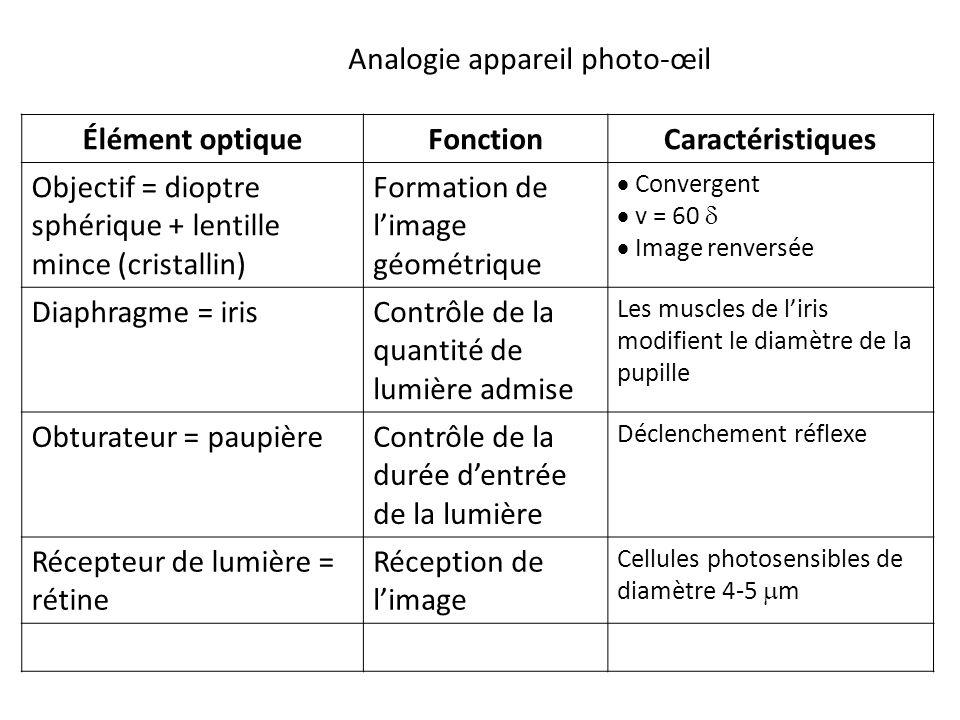 Élément optiqueFonctionCaractéristiques Objectif = dioptre sphérique + lentille mince (cristallin) Formation de l'image géométrique  Convergent  v = 60   Image renversée Diaphragme = irisContrôle de la quantité de lumière admise Les muscles de l'iris modifient le diamètre de la pupille Obturateur = paupièreContrôle de la durée d'entrée de la lumière Déclenchement réflexe Récepteur de lumière = rétine Réception de l'image Cellules photosensibles de diamètre 4-5  m Analogie appareil photo-œil