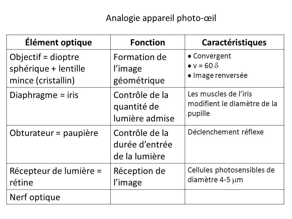 Élément optiqueFonctionCaractéristiques Objectif = dioptre sphérique + lentille mince (cristallin) Formation de l'image géométrique  Convergent  v = 60   Image renversée Diaphragme = irisContrôle de la quantité de lumière admise Les muscles de l'iris modifient le diamètre de la pupille Obturateur = paupièreContrôle de la durée d'entrée de la lumière Déclenchement réflexe Récepteur de lumière = rétine Réception de l'image Cellules photosensibles de diamètre 4-5  m Nerf optique Analogie appareil photo-œil