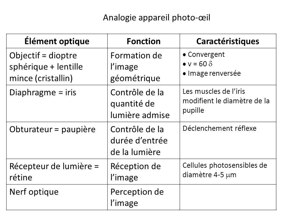 Élément optiqueFonctionCaractéristiques Objectif = dioptre sphérique + lentille mince (cristallin) Formation de l'image géométrique  Convergent  v = 60   Image renversée Diaphragme = irisContrôle de la quantité de lumière admise Les muscles de l'iris modifient le diamètre de la pupille Obturateur = paupièreContrôle de la durée d'entrée de la lumière Déclenchement réflexe Récepteur de lumière = rétine Réception de l'image Cellules photosensibles de diamètre 4-5  m Nerf optiquePerception de l'image Analogie appareil photo-œil