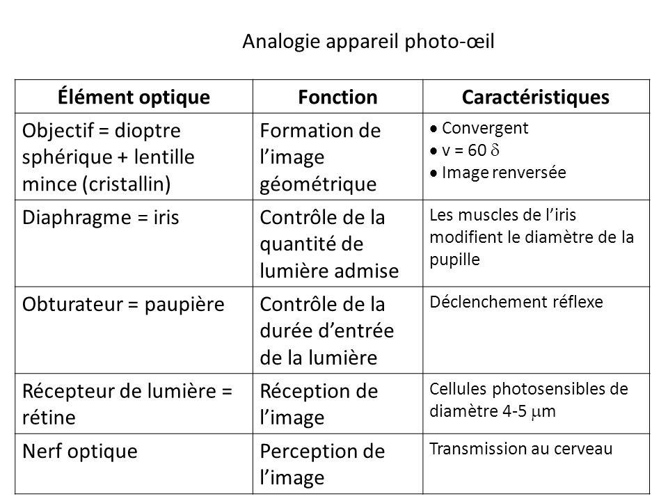 Élément optiqueFonctionCaractéristiques Objectif = dioptre sphérique + lentille mince (cristallin) Formation de l'image géométrique  Convergent  v = 60   Image renversée Diaphragme = irisContrôle de la quantité de lumière admise Les muscles de l'iris modifient le diamètre de la pupille Obturateur = paupièreContrôle de la durée d'entrée de la lumière Déclenchement réflexe Récepteur de lumière = rétine Réception de l'image Cellules photosensibles de diamètre 4-5  m Nerf optiquePerception de l'image Transmission au cerveau Analogie appareil photo-œil