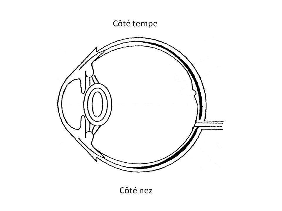 Côté tempe Côté nez