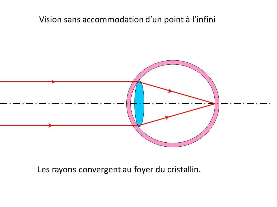 Les rayons convergent au foyer du cristallin.
