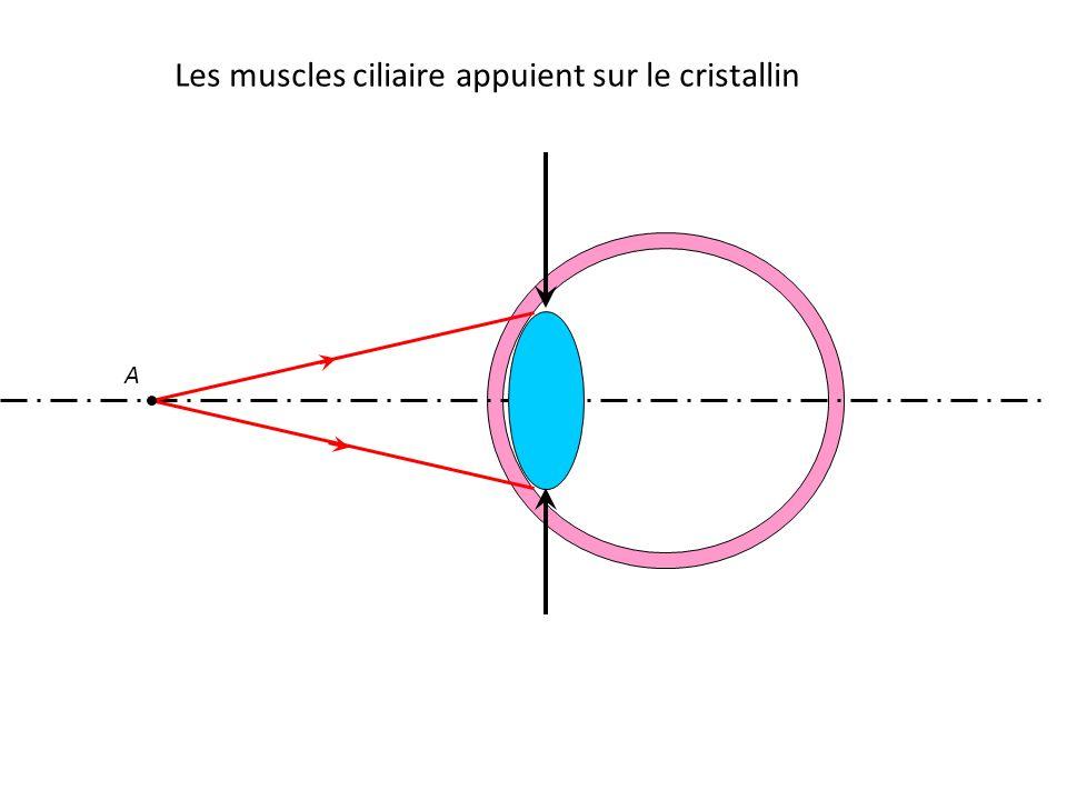 Les muscles ciliaire appuient sur le cristallin A