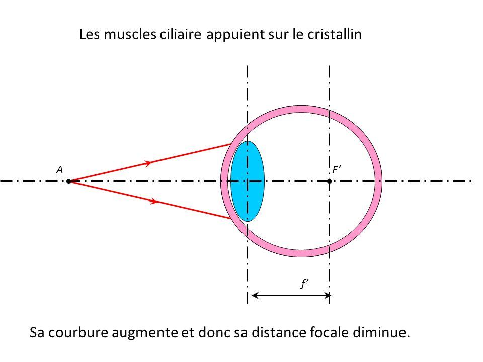 A Sa courbure augmente et donc sa distance focale diminue. F' f'