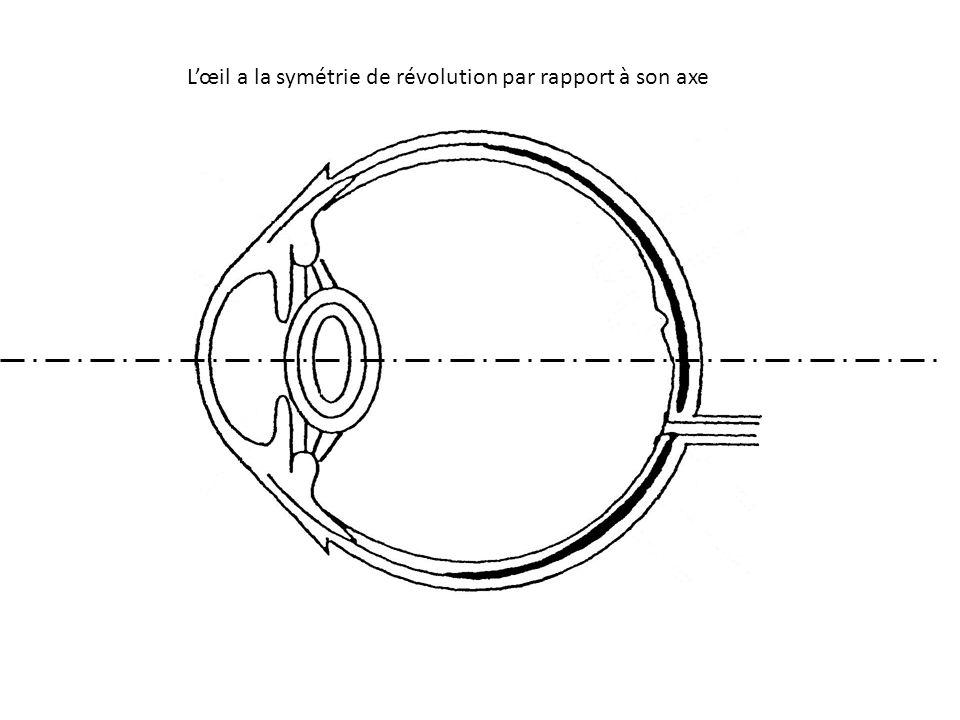 L'œil a la symétrie de révolution par rapport à son axe