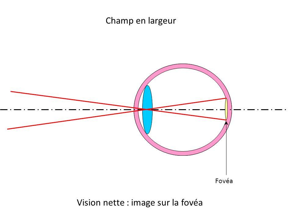 Champ en largeur Fovéa Vision nette : image sur la fovéa