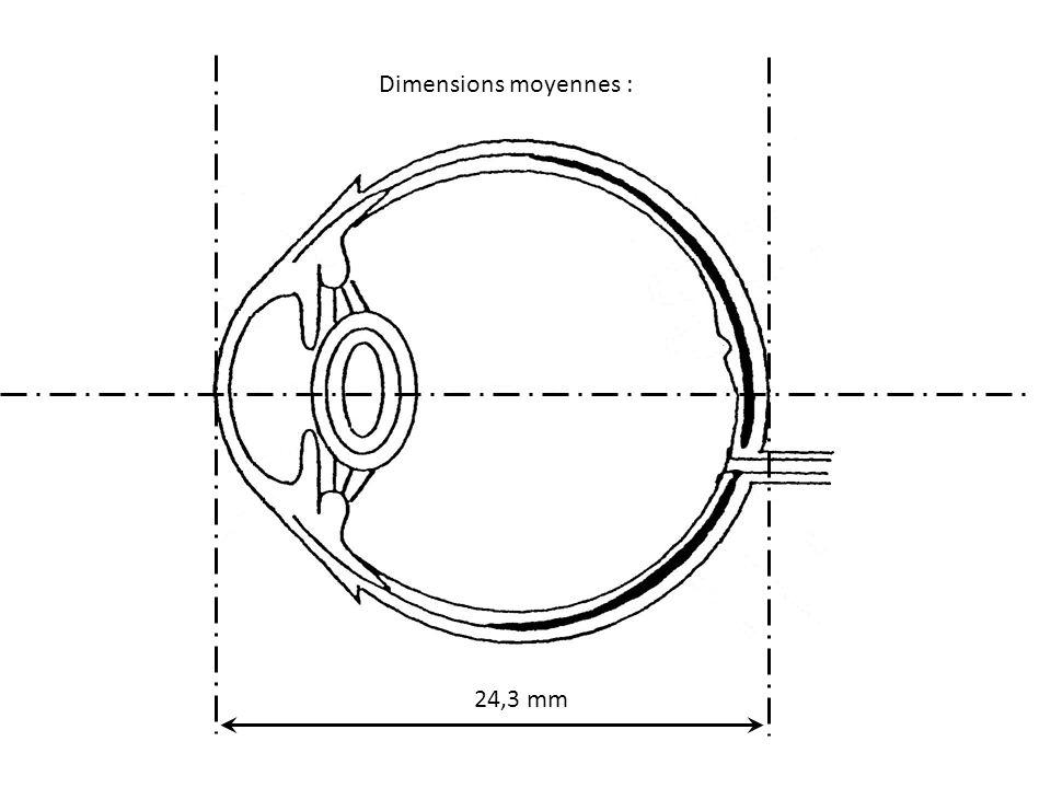 Dimensions moyennes : 24,3 mm