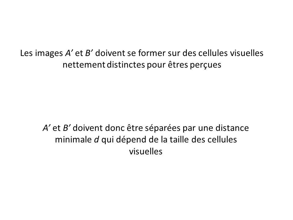 A' et B' doivent donc être séparées par une distance minimale d qui dépend de la taille des cellules visuelles