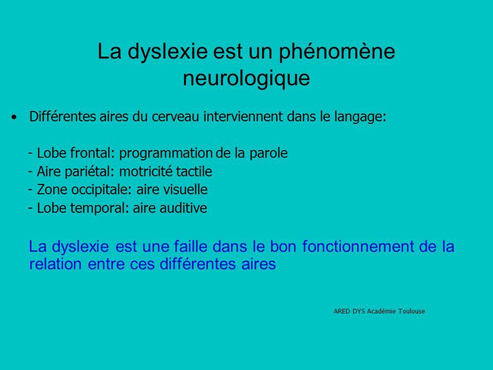 La dyslexie est un phénomène neurologique Différentes aires du cerveau interviennent dans le langage: - Lobe frontal: programmation de la parole - Aire pariétal: motricité tactile - Zone occipitale: aire visuelle - Lobe temporal: aire auditive La dyslexie est une faille dans le bon fonctionnement de la relation entre ces différentes aires ARED DYS Académie Toulouse