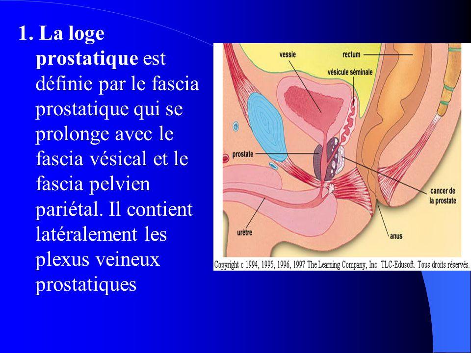 1. La loge prostatique est définie par le fascia prostatique qui se prolonge avec le fascia vésical et le fascia pelvien pariétal. Il contient latéral