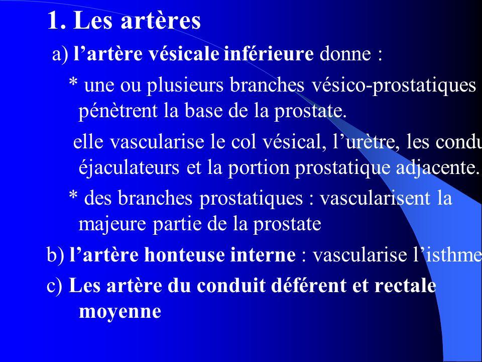 1. Les artères a) l'artère vésicale inférieure donne : * une ou plusieurs branches vésico-prostatiques qui pénètrent la base de la prostate. elle vasc