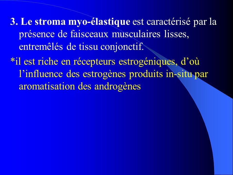 3. Le stroma myo-élastique est caractérisé par la présence de faisceaux musculaires lisses, entremêlés de tissu conjonctif. *il est riche en récepteur