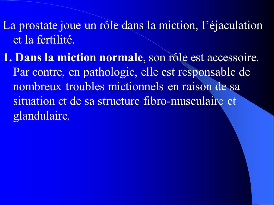 La prostate joue un rôle dans la miction, l'éjaculation et la fertilité. 1. Dans la miction normale, son rôle est accessoire. Par contre, en pathologi