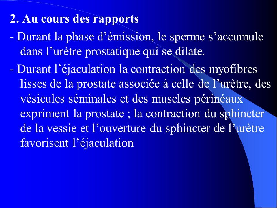 2. Au cours des rapports - Durant la phase d'émission, le sperme s'accumule dans l'urètre prostatique qui se dilate. - Durant l'éjaculation la contrac