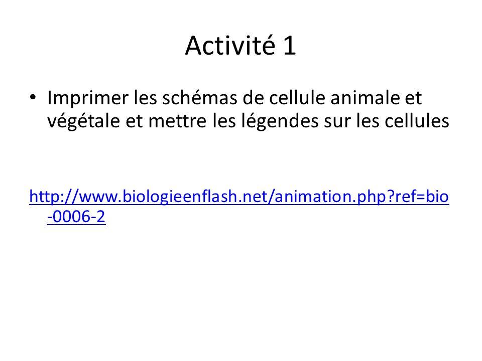 Activité 1 Imprimer les schémas de cellule animale et végétale et mettre les légendes sur les cellules http://www.biologieenflash.net/animation.php ref=bio -0006-2