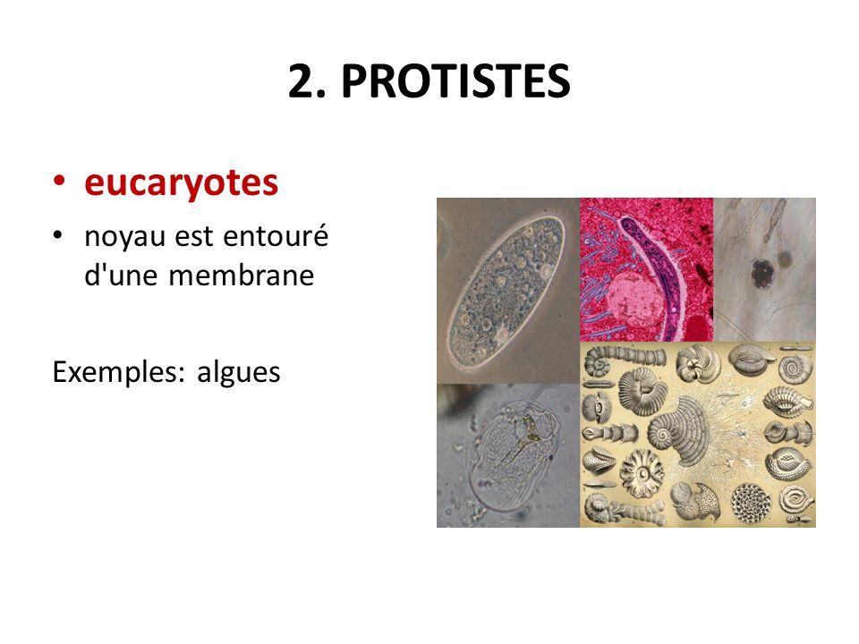 2. PROTISTES eucaryotes noyau est entouré d une membrane Exemples: algues