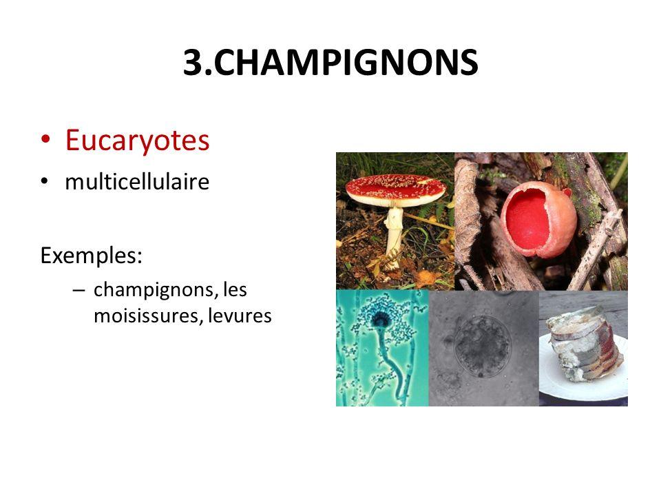 3.CHAMPIGNONS Eucaryotes multicellulaire Exemples: – champignons, les moisissures, levures
