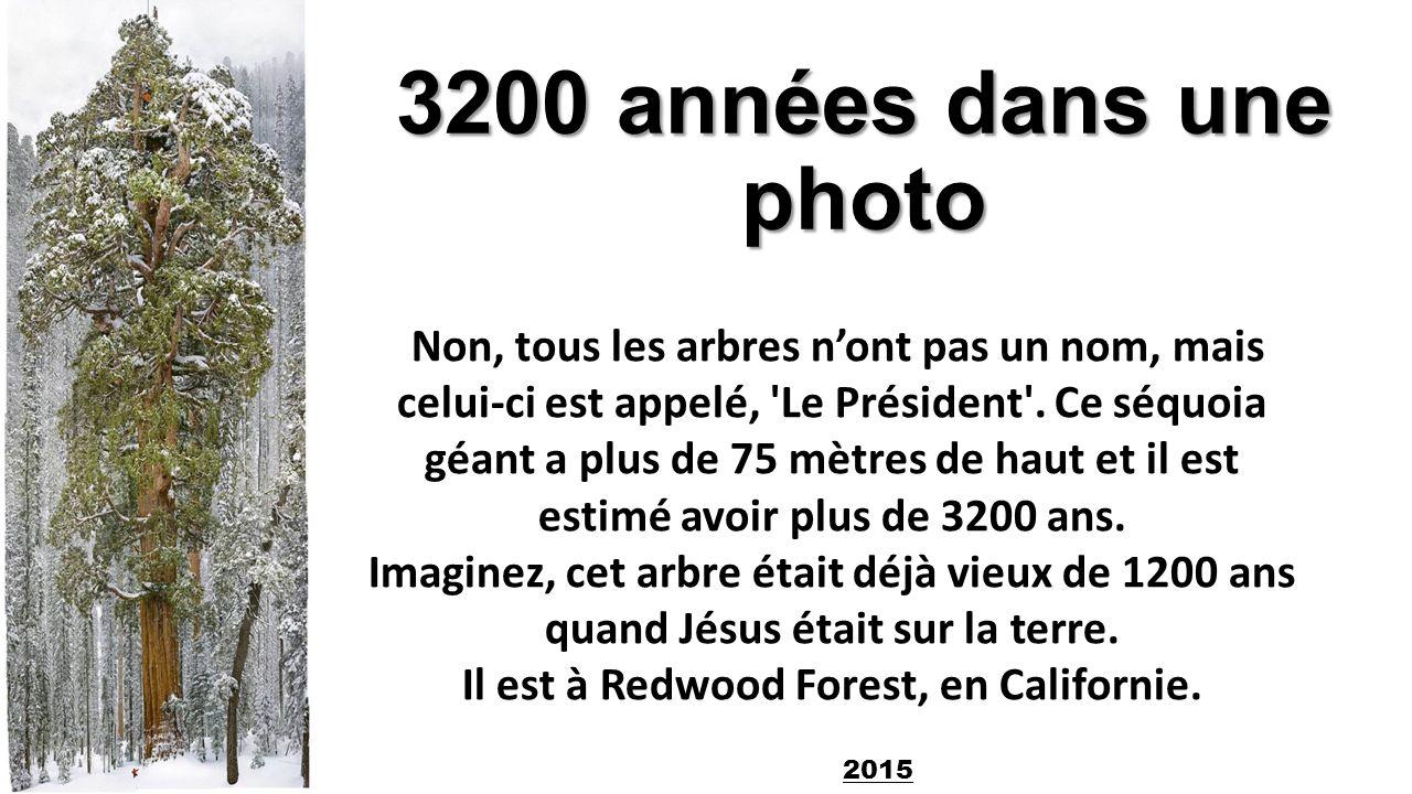 3200 années dans une photo Non, tous les arbres n\'ont pas un nom ...