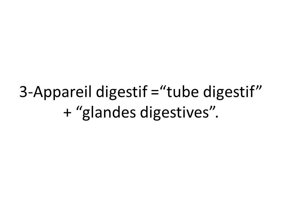 """3-Appareil digestif =""""tube digestif"""" + """"glandes digestives""""."""