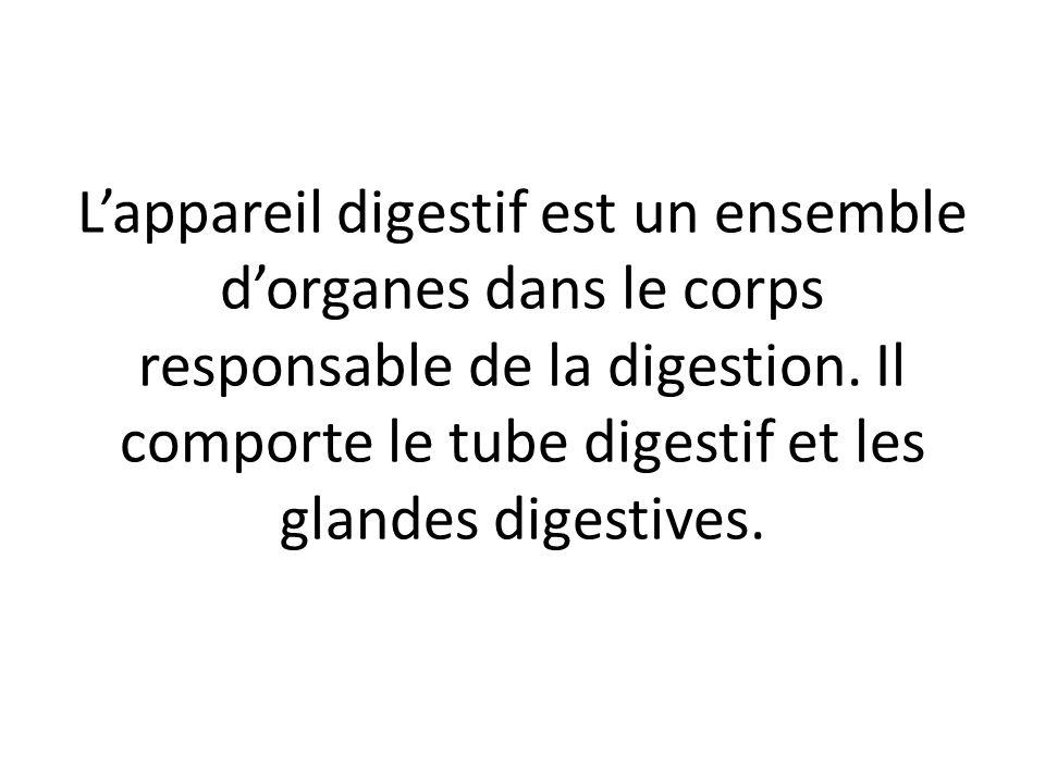 L'appareil digestif est un ensemble d'organes dans le corps responsable de la digestion. Il comporte le tube digestif et les glandes digestives.
