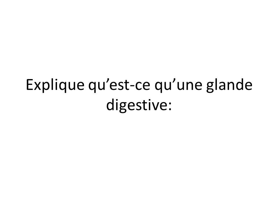 Explique qu'est-ce qu'une glande digestive: