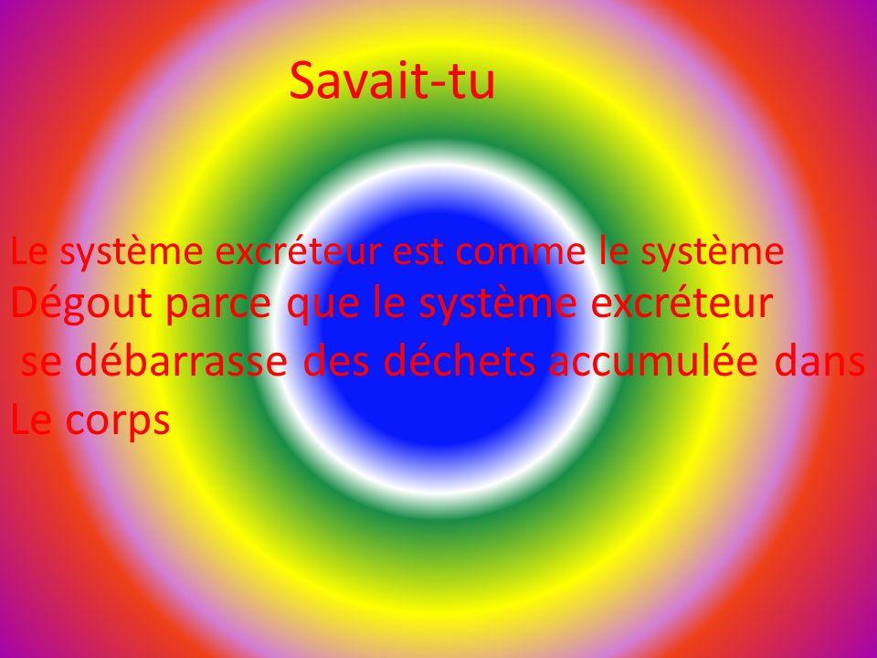 Savait-tu Le système excréteur est comme le système Dégout parce que le système excréteur se débarrasse des déchets accumulée dans Le corps