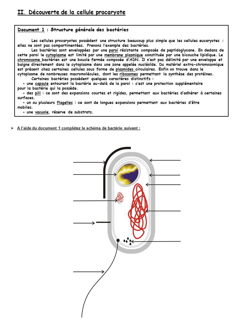  A l'aide du document 1 complétez le schéma de bactérie suivant : II.