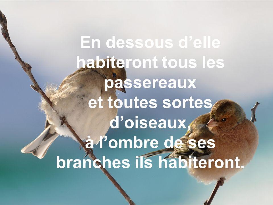 En dessous d'elle habiteront tous les passereaux et toutes sortes d'oiseaux, à l'ombre de ses branches ils habiteront.