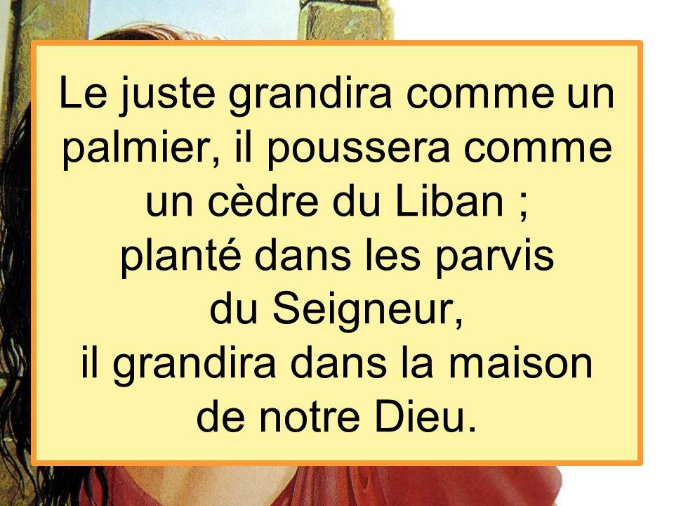 Le juste grandira comme un palmier, il poussera comme un cèdre du Liban ; planté dans les parvis du Seigneur, il grandira dans la maison de notre Dieu.