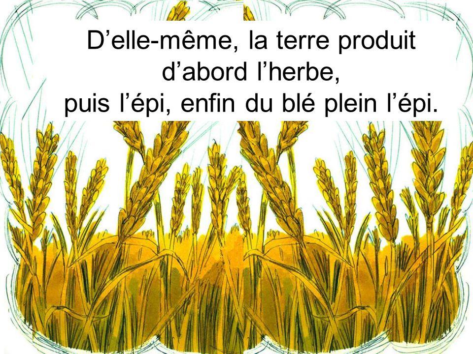 D'elle-même, la terre produit d'abord l'herbe, puis l'épi, enfin du blé plein l'épi.