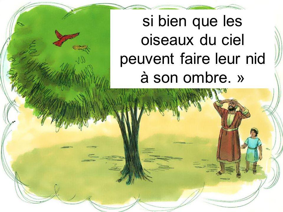 si bien que les oiseaux du ciel peuvent faire leur nid à son ombre. »