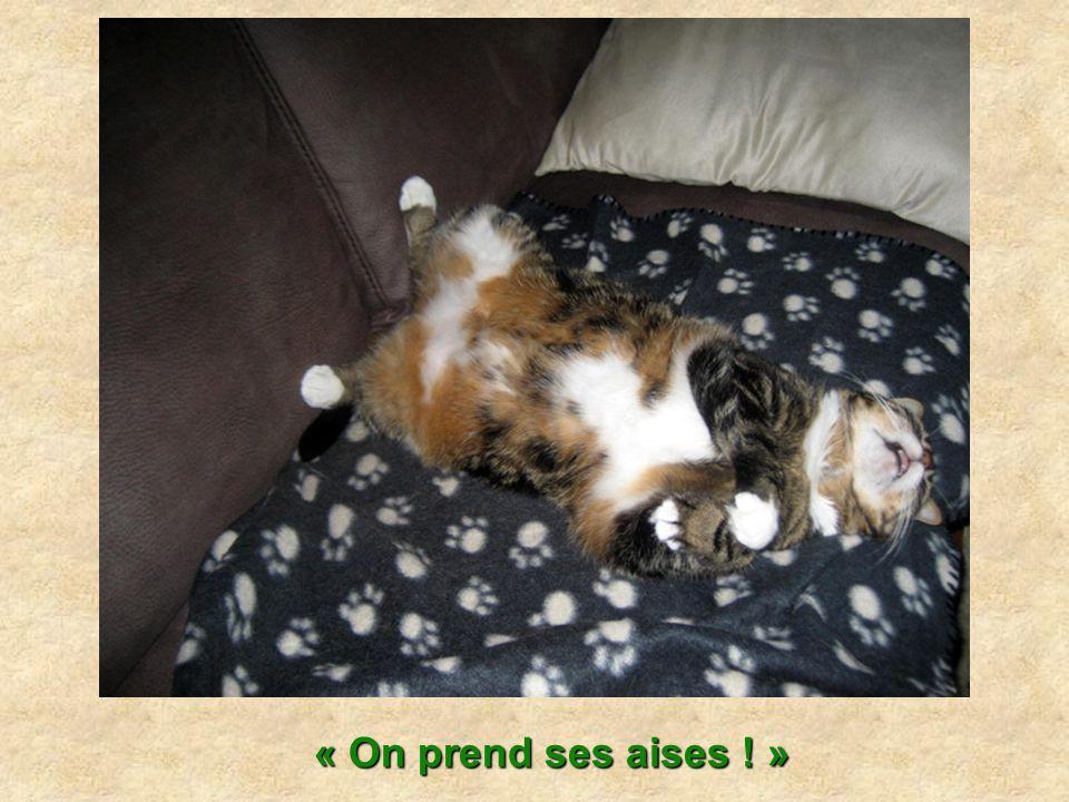 Pour dormir tranquille, le chat a besoin de se sentir en sécurité.
