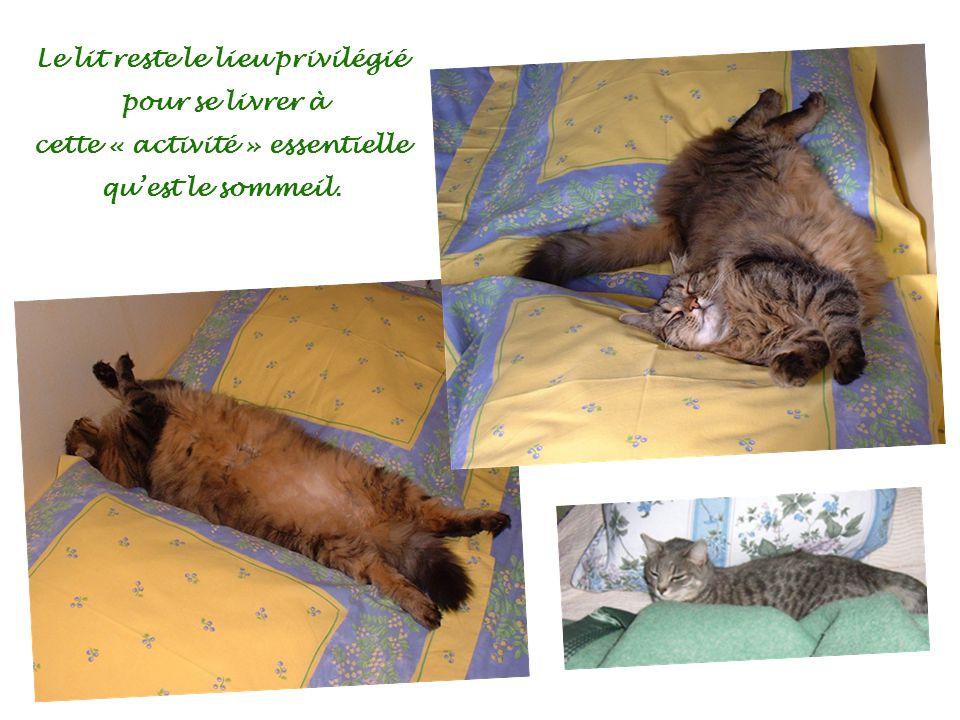 Le lit reste le lieu privilégié pour se livrer à cette « activité » essentielle quest le sommeil.