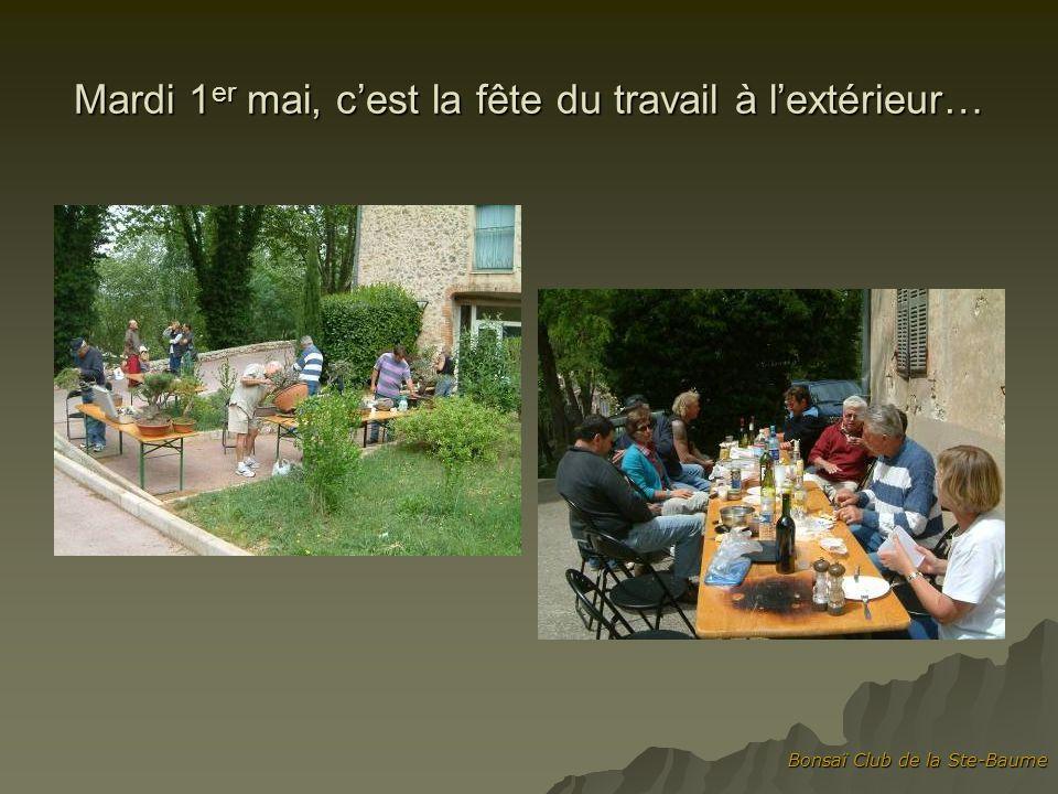 Bonsaï Club de la Ste-Baume Mardi 1 er mai, cest la fête du travail à lextérieur…