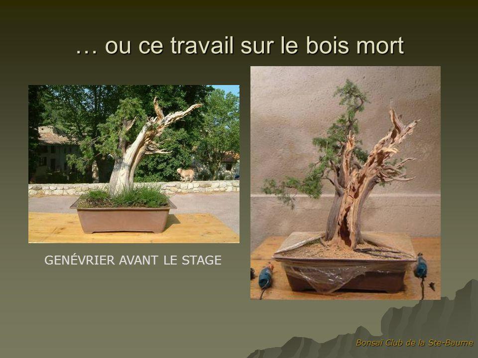 Bonsaï Club de la Ste-Baume … ou ce travail sur le bois mort GENÉVRIER AVANT LE STAGE
