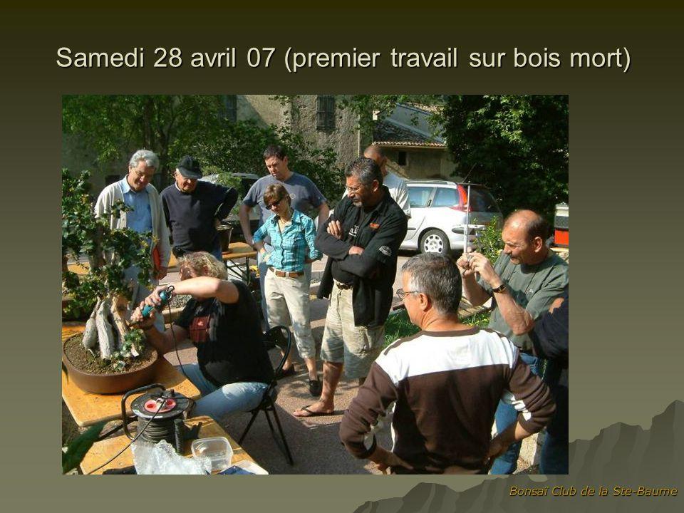 Bonsaï Club de la Ste-Baume Samedi 28 avril 07 (premier travail sur bois mort)