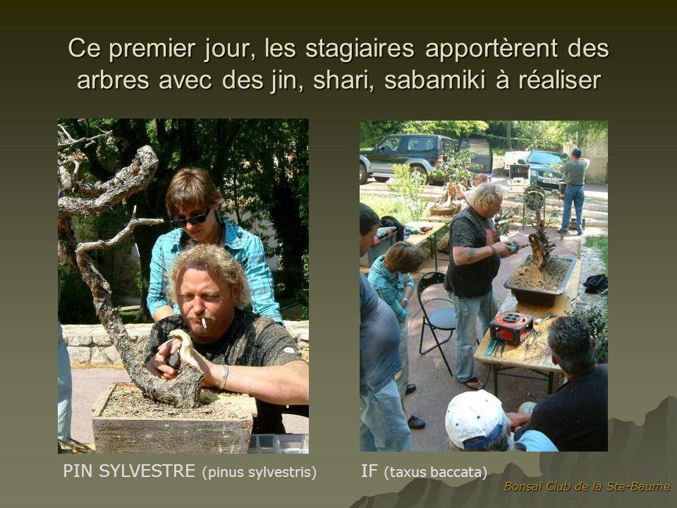 Bonsaï Club de la Ste-Baume Ce premier jour, les stagiaires apportèrent des arbres avec des jin, shari, sabamiki à réaliser PIN SYLVESTRE (pinus sylve