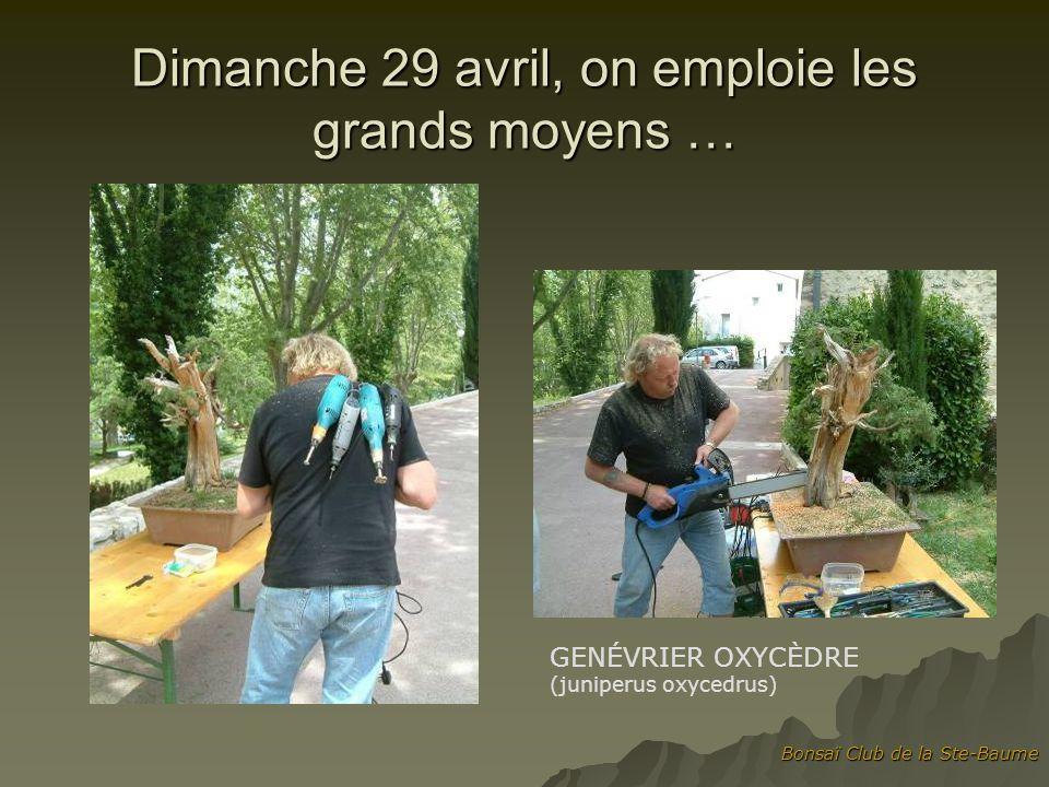 Bonsaï Club de la Ste-Baume Dimanche 29 avril, on emploie les grands moyens … GENÉVRIER OXYCÈDRE (juniperus oxycedrus)