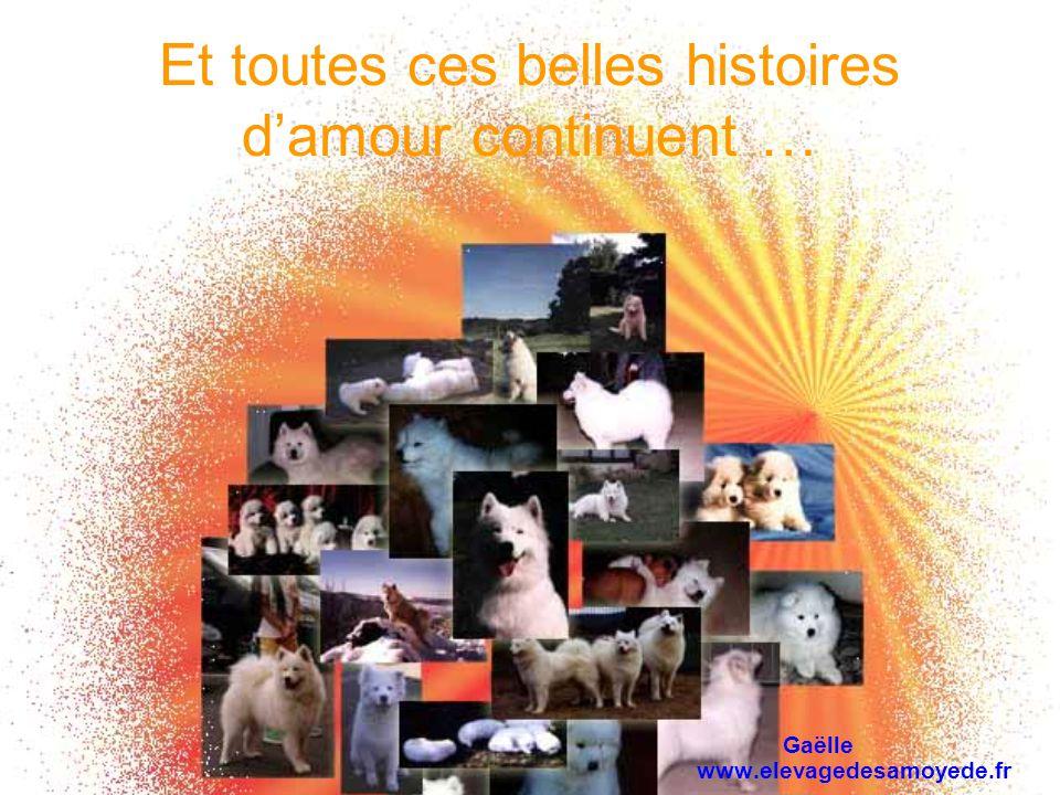 Et toutes ces belles histoires damour continuent … Gaëlle www.elevagedesamoyede.fr