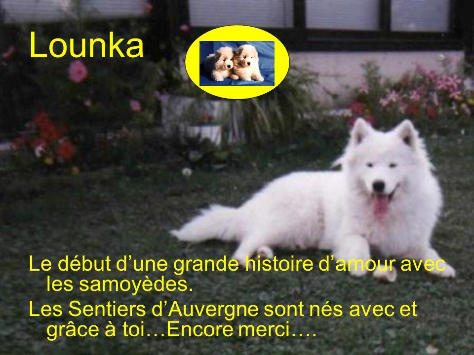 Lounka Le début dune grande histoire damour avec les samoyèdes.