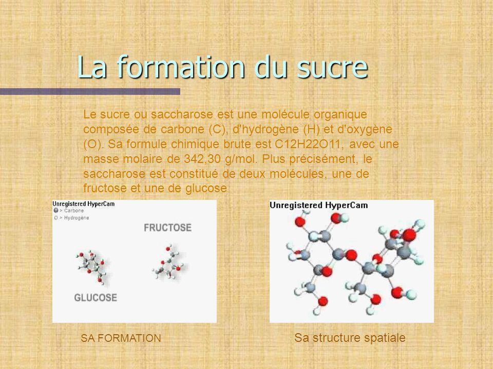 La formation du sucre SA FORMATION Sa structure spatiale Le sucre ou saccharose est une molécule organique composée de carbone (C), d'hydrogène (H) et