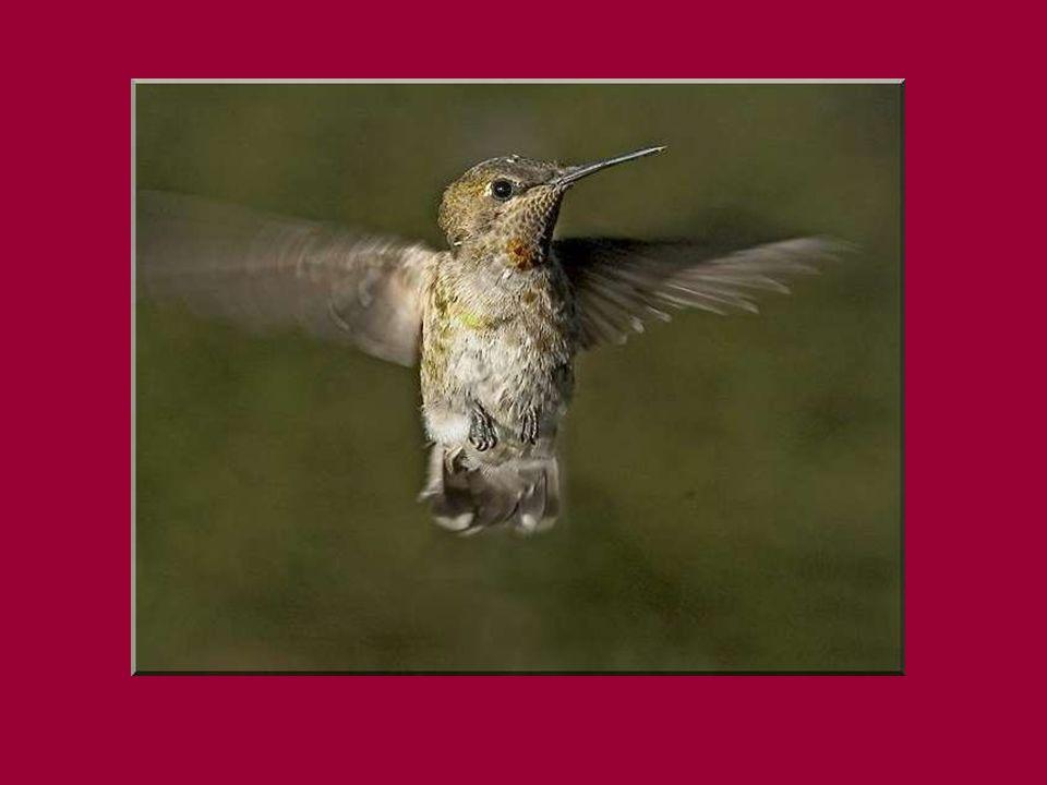 CONTE Il était une fois, dans des temps bien reculés, un petit oiseau bien seul.